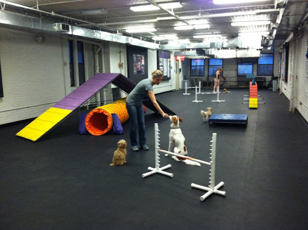 Img obediencia canina
