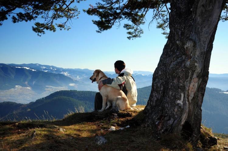 Img orugas perros proteger trucos art