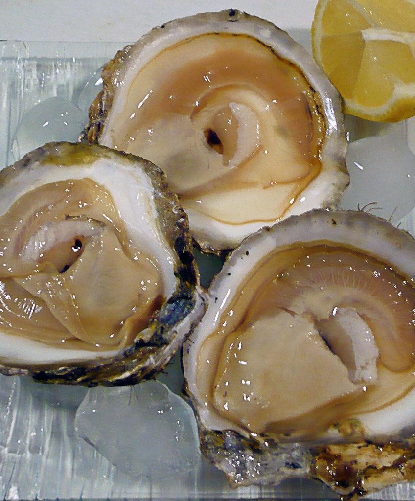 Img ostras