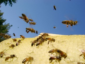 Img panal abejas