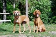 img_pareja perros peque a2jpg