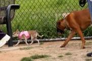 img_parques perros listado