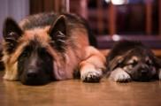 img_parto perros recuperacion cuidados peligros mascotas animales listado