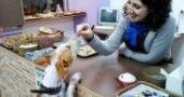 Img pasteleria perros perruna reposteria animales mascotas madrid barcelona mascotas animales galletas listado