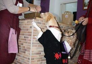 Img pasteles perros pastelerias galletas mascotas animales miguitas art