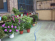Img patios