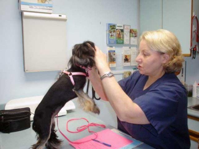 Img perra veterinarianuestra