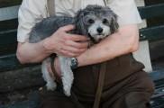 Img perro abuelo hipertension enfermedad listado