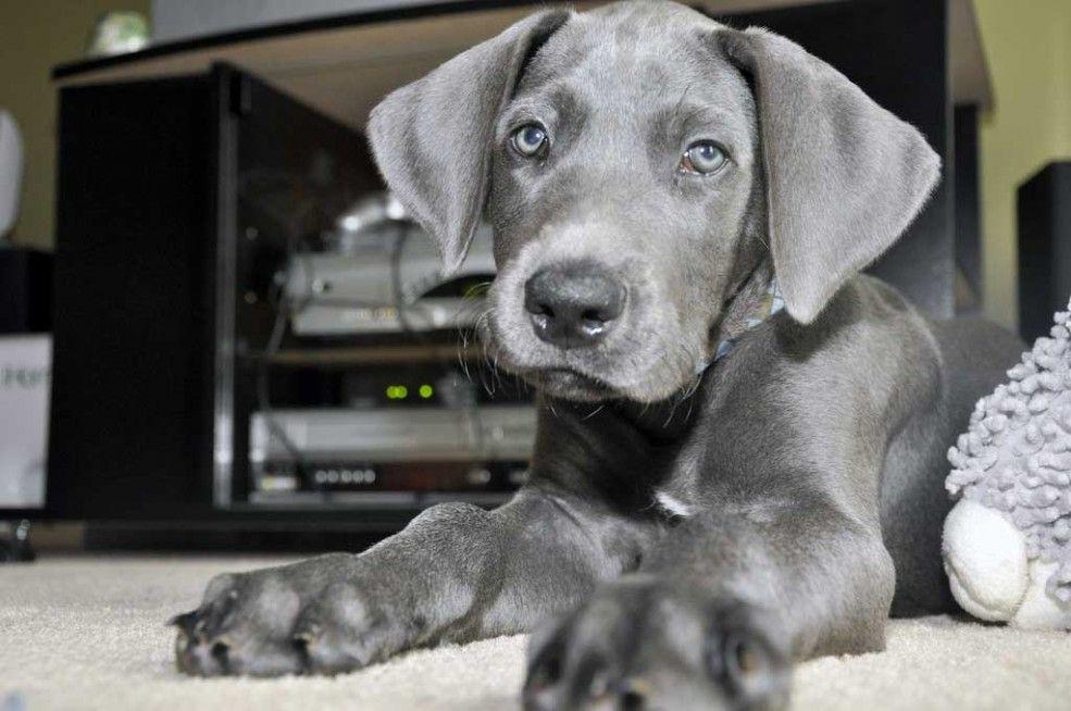 Img perro alfombranuestra