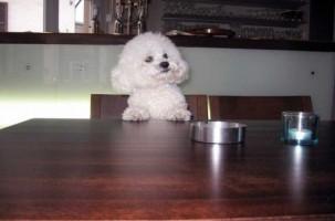 Img perro alimentos educar alimentacion comida animales mascotas art