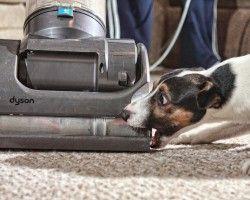 Img perro aspirador pelos limpieza art