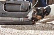 Img perro aspirador pelos limpieza listado