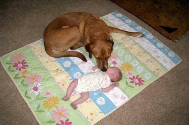 Img perro bebegrandenuestra
