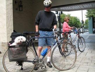 Img perro bici art