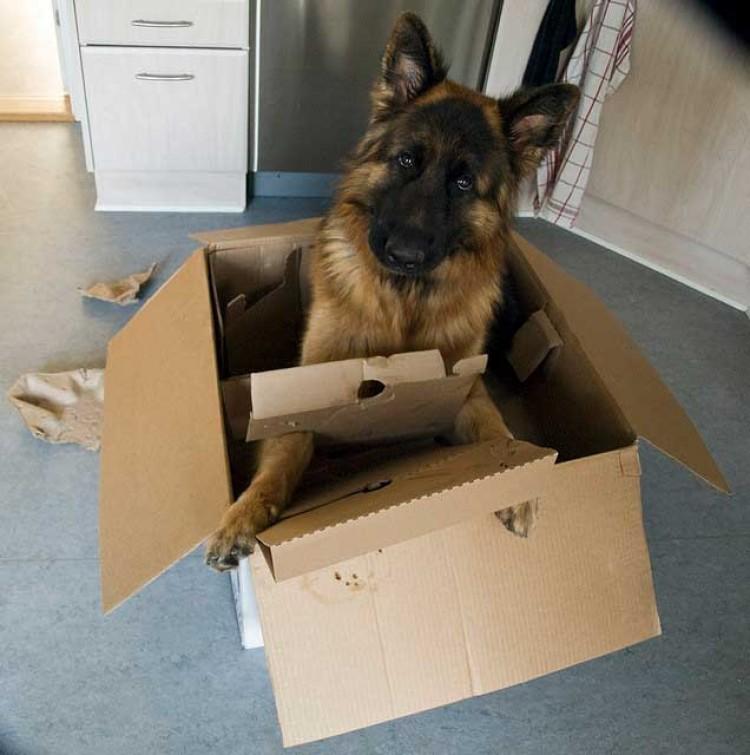 Img perro caja jugar art