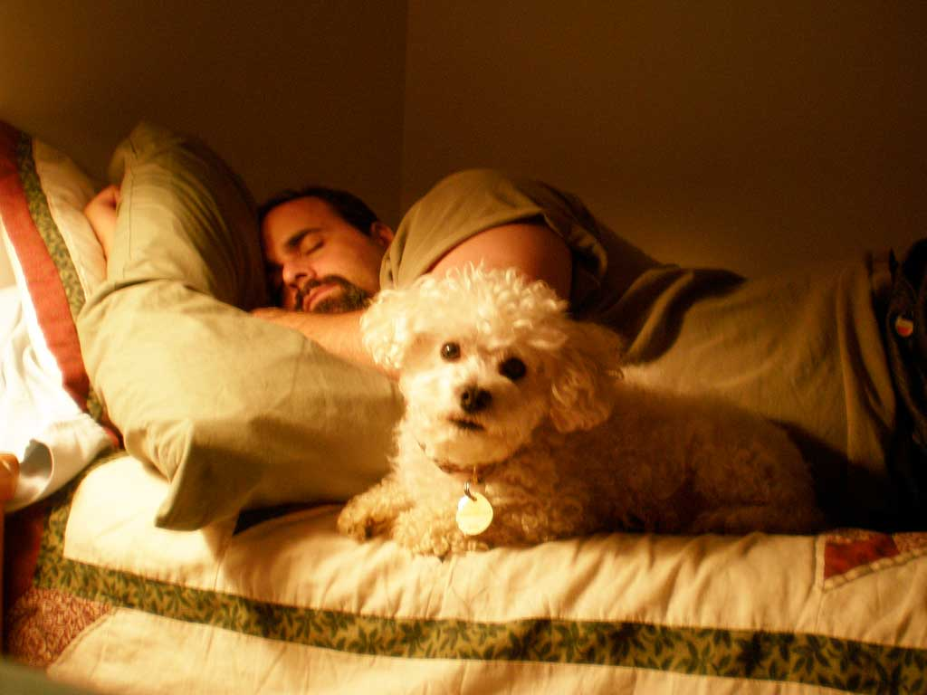 Img perro cama
