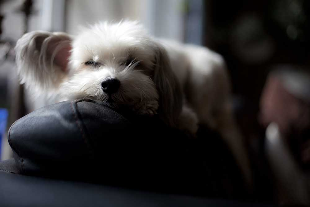 img_perro cansado