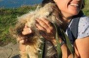 Img perro cara beso lamido listado