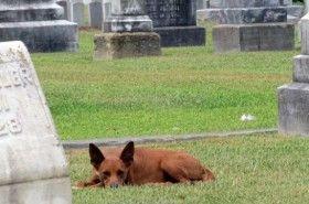 Img perro cementerio art