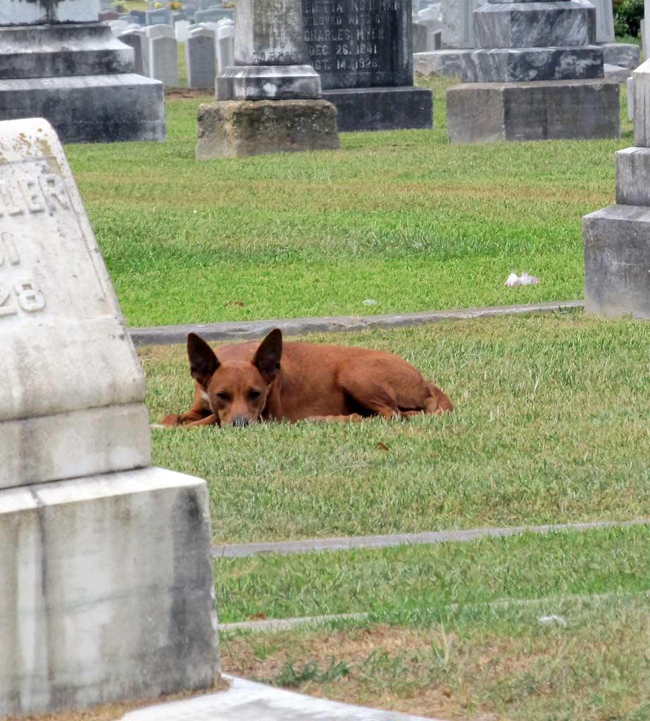 Img perro cementerio