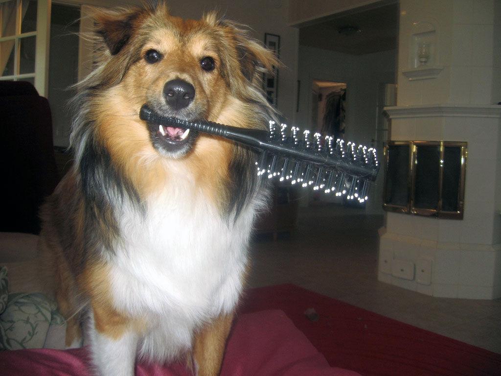 Img perro cepillo