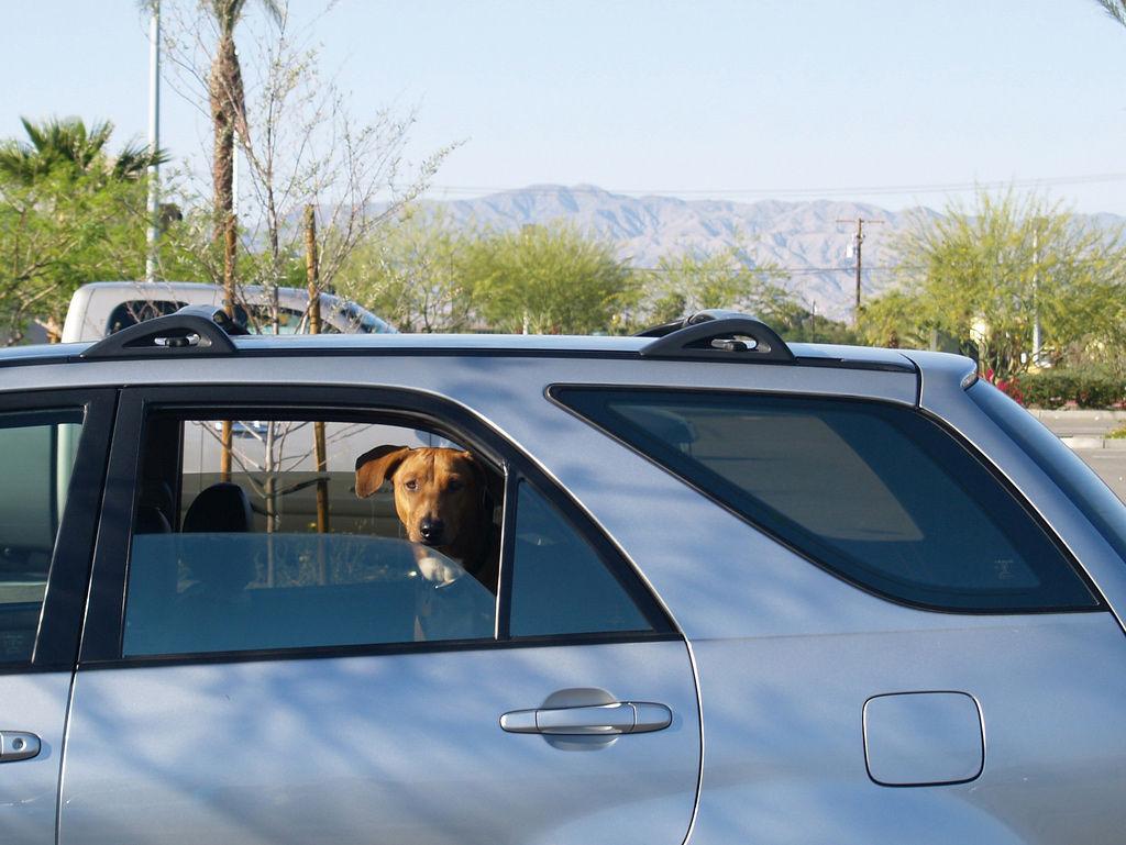 Img perro coche
