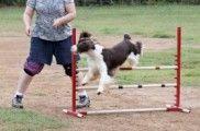 Img perro deportista listado