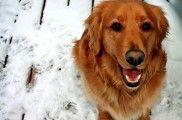 img_perro enfermedades invierno frio salud consejos listado