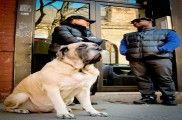 img_perro enormepeque ajpg