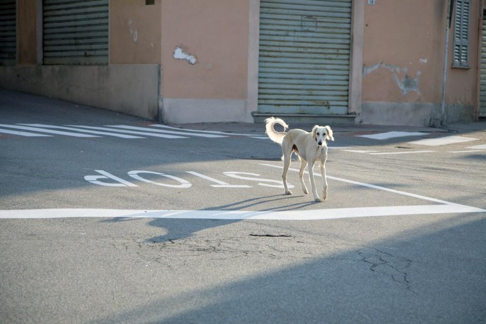 Img perro escapistanuestra