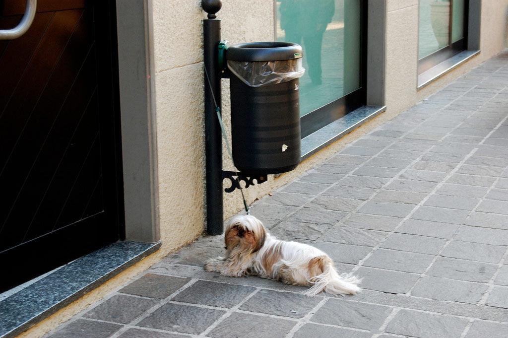 Img perro esperando
