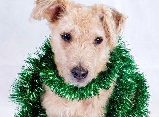 Img perro espumillon peligros navidad luces art