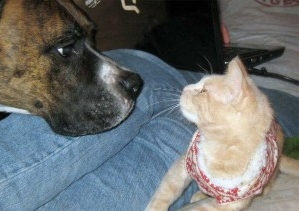 Img perro gato convivencia amistad consejos art
