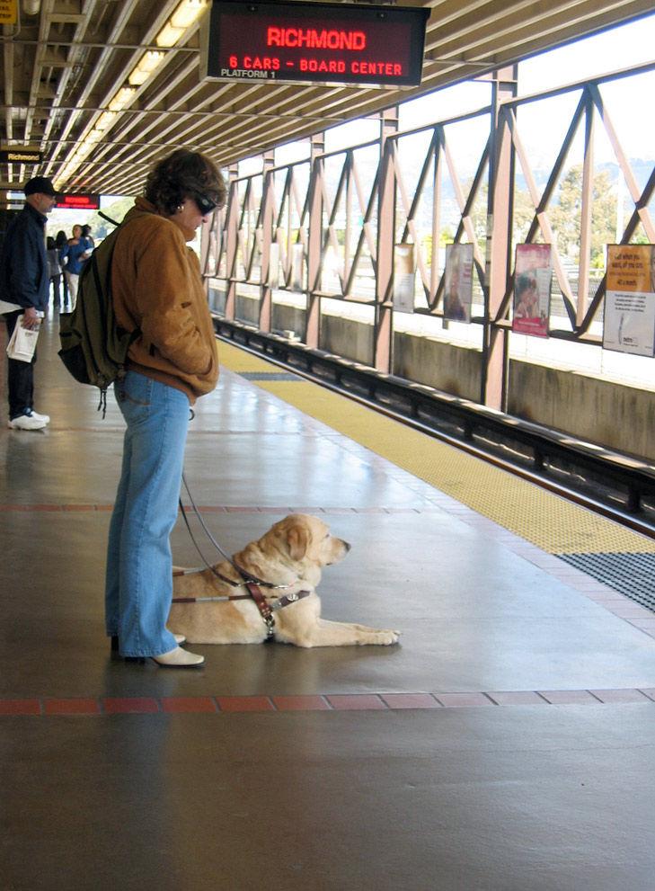 Img perro guia tren