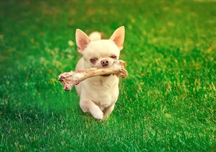 Img perro huesos juguetes1 art