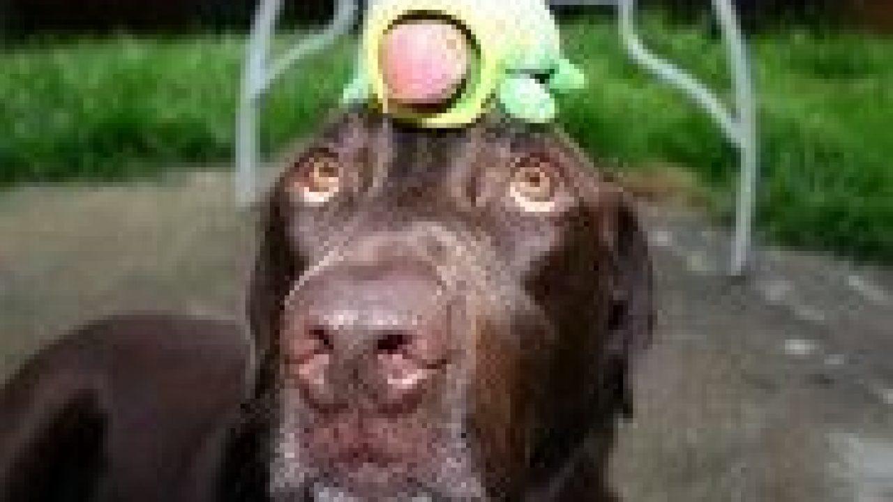 11 Juegos Para La Mente Del Perro Consumer