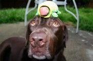 Img perro juego inteligencia listado
