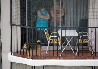 Img perro ladrandonuestra vecinos art
