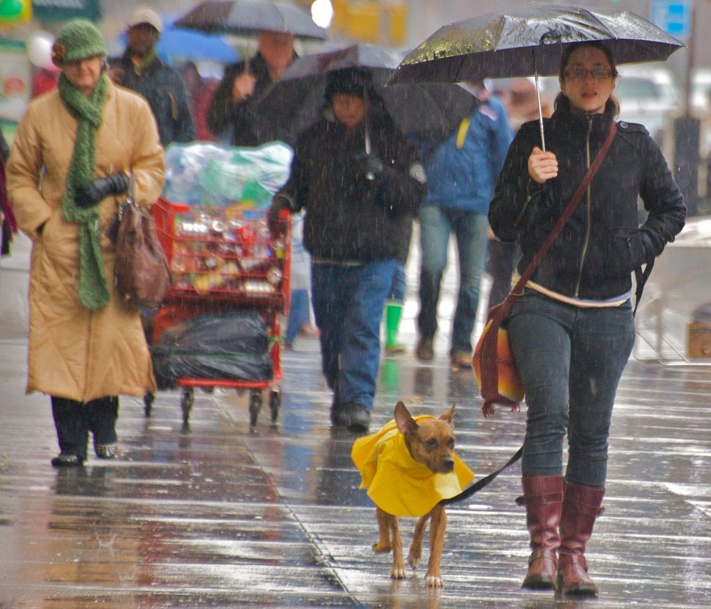 img_perro lluvia chubasquero