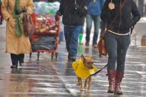 Img perro lluvia frio chubasquero art