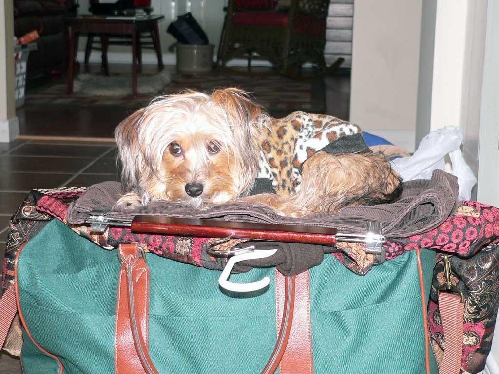 Img perro maleta