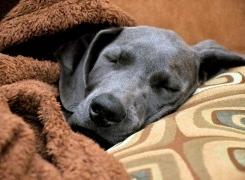 Eutanasia En Perros Las Cinco Dudas Más Habituales Consumer