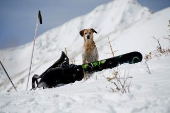 Img perro nieve esquiar viajes art