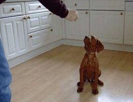 Img perro obediente art