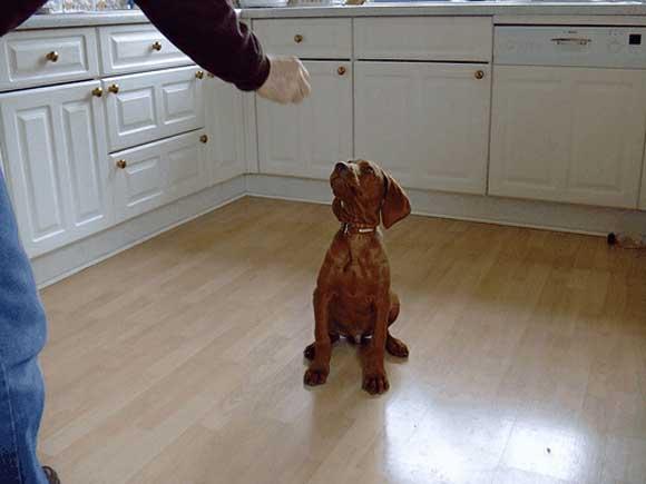 Img perro obediente