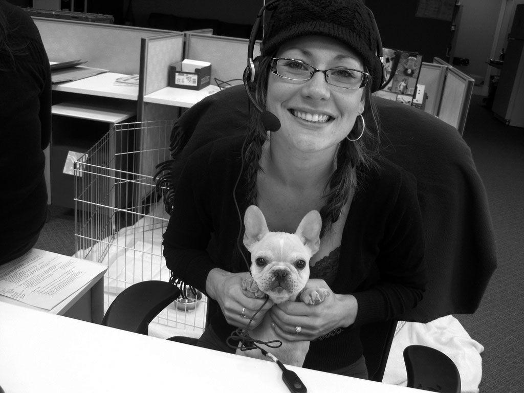 Img perro oficina