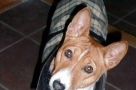 Img perro orejas art