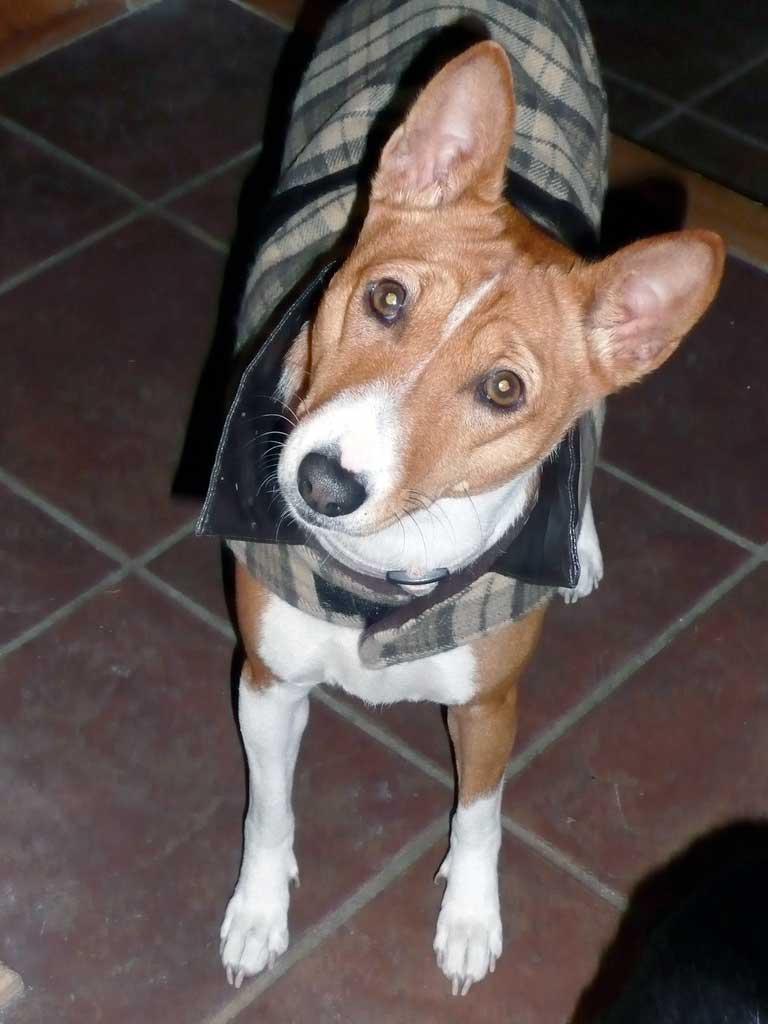 img_perro orejas