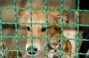 Img perro perrera adoptar abandono internet listado