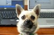 img_perro portatiles ordenadores trwitter facebook mascotas listado